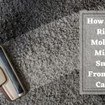 How To Get Rid Of Mold and Mildew Smells From Your Carpet