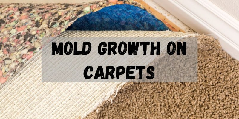 MOLD GROWTH ON CARPETS