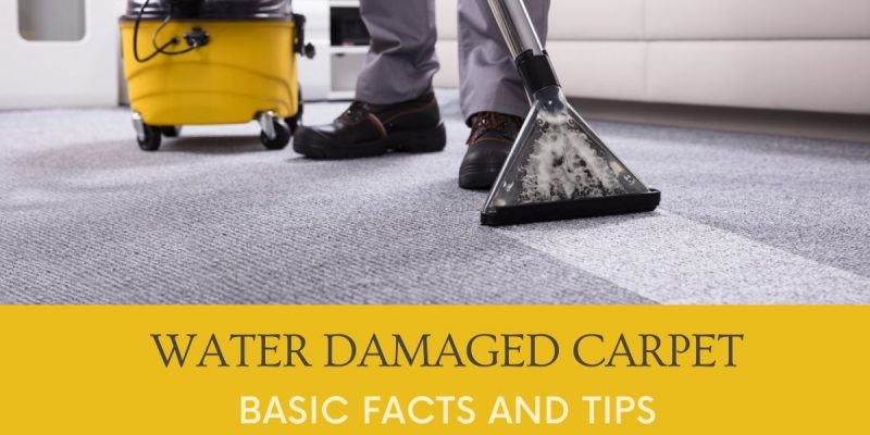 Water Damaged Carpet Basic Facts and Tips