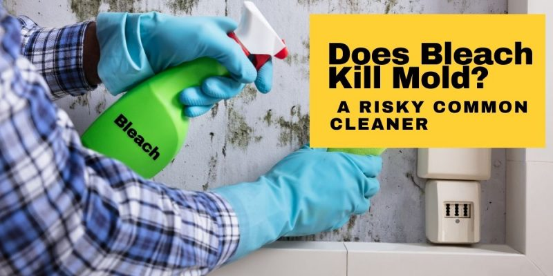 Does Bleach Kill Mold A Risky Common Cleaner
